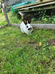 Kaninchen männlich und weiblich