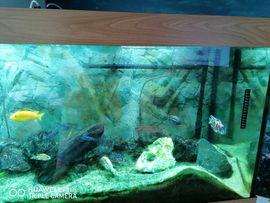 Fische, Aquaristik - Aquarium mit Fischen