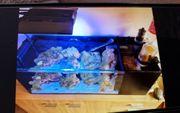 Komplettes meerwasseraquarium 72 liter