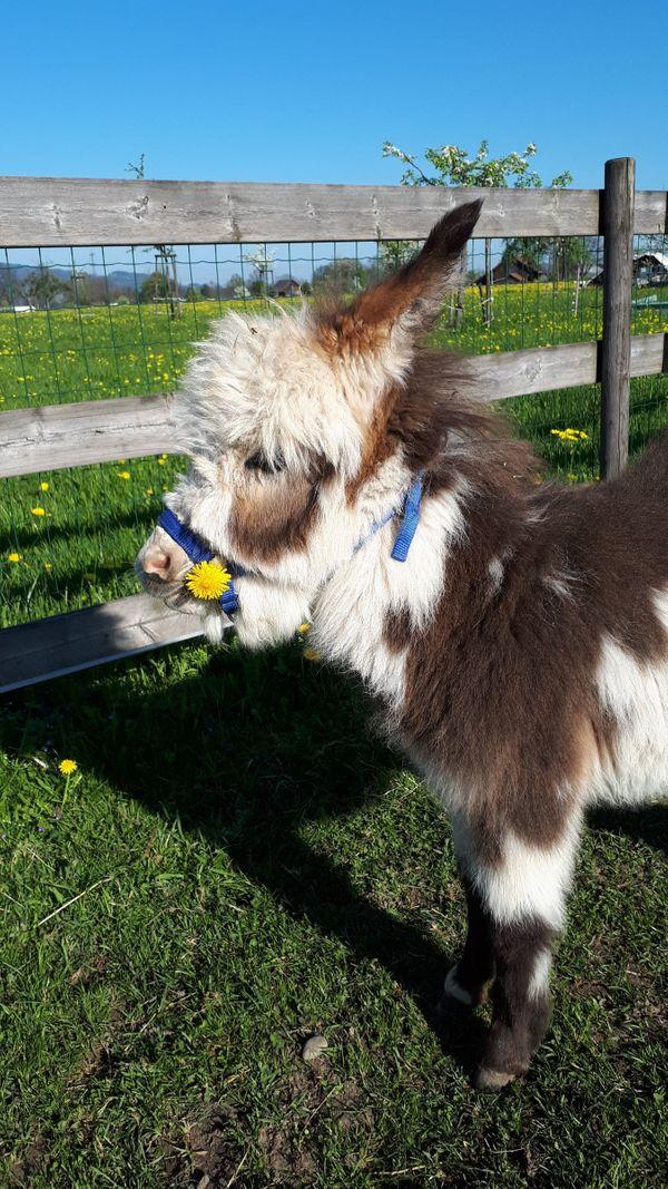 Einstellplatz für Esel und Ziegen