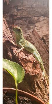 Nehme Wasseragamen und Tropengeckos auf