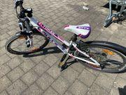 Fahrrad Mädchen Bulls