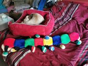 Hundebett mit Spielzeug