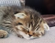 M W Kitten suchen eine