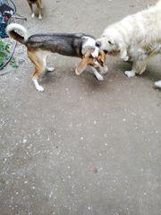 Hundebetreuung mit Familien Anschluss