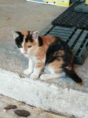 2 weibliche Hauskatzen an neue