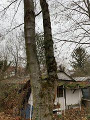 Brennholz in KA-Durlach