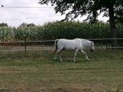 Reitbeteiligung Erfahrene Reiterin sucht Pferd