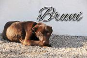 Zeigen Sie Bruni das Leben