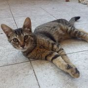 Katzenjunge Elias wartet sehnsüchtig auf