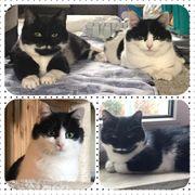 2 wunderschöne Katzen 7 Monate