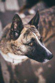 Hundemädchen sucht ein Zuhause