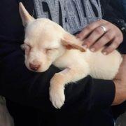 Süßes Hundemädchen Marvel