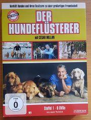 Der Hundeflüsterer mit Cesar Millan