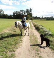 Reitbeteiligung an Kleinpferd Arabermix
