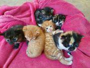 Suche Katze Katzen Katzenbaby Junge