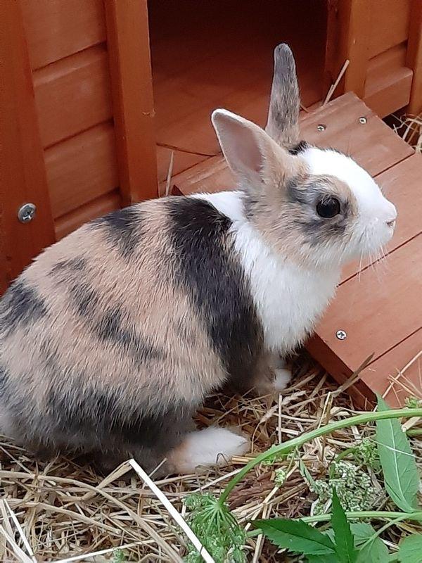 Zuckersüße Kaninchenbabys aus dem Tierschutz