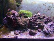 Meerwasser Fische Korallen Besatz Abzugeben