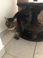 Senioren-Katzen suchen DRINGEND ein neues