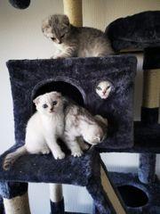 wünderschöne kitten