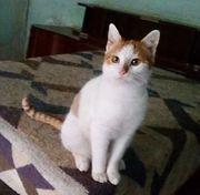 Charly - ein süßer Katzenbub