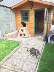 Katzenpension mit Freigehege