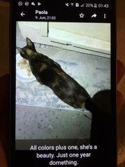 Katze Beauty sucht Zuhause zu