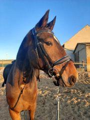Biete Pferd zur Verfügung