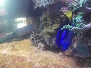 Meerwasser Fisch Paletten Doktor ca