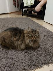 2 verschmuste Katzen