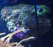 Tunze Coral Rack nano inkl