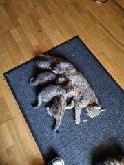 Zuckersüsse Katzenbabys suchen ein neues
