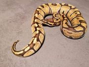 0 1 Enchi Fire Vanilla