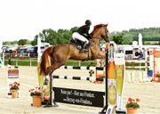 Top Amateur Springpferd