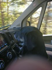 Urlaub mit Hund LÄNDLEWOHNMOBIL at