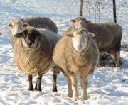 Winter- und Zeugnisferien für 3-5