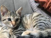 Katzenbabys suchen gutes Zuhause