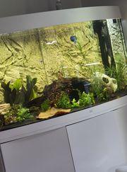 Aquarium panorama 260l mit oder