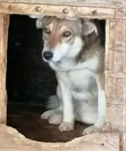 Pflegestellen für Tierschutzhunde gesucht