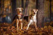 Bonny und Clyde suchen ein