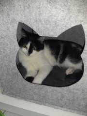 Katze Milka 7 Monate kastriert