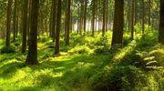 Größeres Waldgrundstück in Dornbirn gesucht