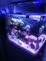 Meerwasser Aquarium 100l Maxspect RSX