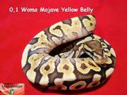 0 1 Woma Mojave YB