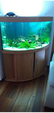 Juwel Aquarium Achtung neuer Preis