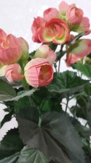 Kunstblume im Topf ich glaube