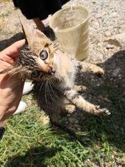 Nazami Katze aus dem Tierschutz
