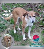 Lina Lu - Meine Tochter heißt