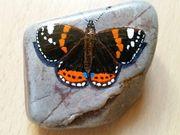 Schmetterlinge auf Stein gemalt Rockpainting