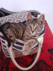 Katzenmädchen Finja sucht ein liebevolles